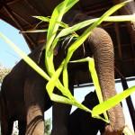 Elefants de Pai, un poble creat per hippies ubicat al nord del país.