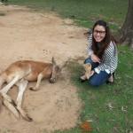 Donant menjar a nes canguros a Brisbane, Australia