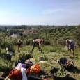 Aquesta setmana ha començat la IV Campanya d'intervenció al jaciment arqueològic de Mestre Ramon. Amb la campanya, que es va iniciar dilluns 14 d'abril i que es preveu que acabi […]