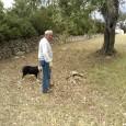 Jeroni Andreu últimament s'ha vist molt afectat pels atacs de cans abandonats al seu ramat d'ovelles. En el que va d'any és la segona vegada i la darrera va ser […]
