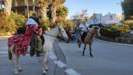 La matinada del dia 6 de gener, lacavalcadadels Reis d'orient arribava a Cala Bona i Cala Millor. Sesmajestatsho feien amb cavallsrecarregantels carrersper saludar i repartir els regals.