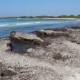 Des de la Regidoria de Turisme, es vol informar sobre el protocol publicat pel Ministeri de Medi Ambient que regula la retirada de la posidònia oceànica, ja quecada any es […]