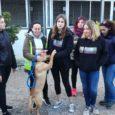 Aquest és el reportatge que va emetre TV Serverina, per conèixer la labor desinteressada que fan aquest grup de dones voluntàries de la canera municipal.
