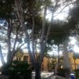 L'ajuntamentmitjançantl'aportació que fa el Consell de Mallorca, dins el Pla d'obres i Serveis,faràla reforma de la plaça de la creu dels Caiguts, davant el local de la gent gran de […]