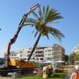 El passat dimecres matí i sota la supervisió dels tècnics de la Conselleria d'Agricultura del Govern Balear, es van talar sis palmeres del passeig marítim de Cala Bona, situades dins […]