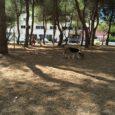 L'Ajuntament està realitzant obres de millora al parc camí de Cala Millor, atenent així, algunes de les peticions fetes pels usuaris. La majoria de les obres seran realitzades per la […]